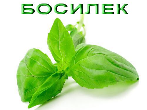 Босилек, Basil