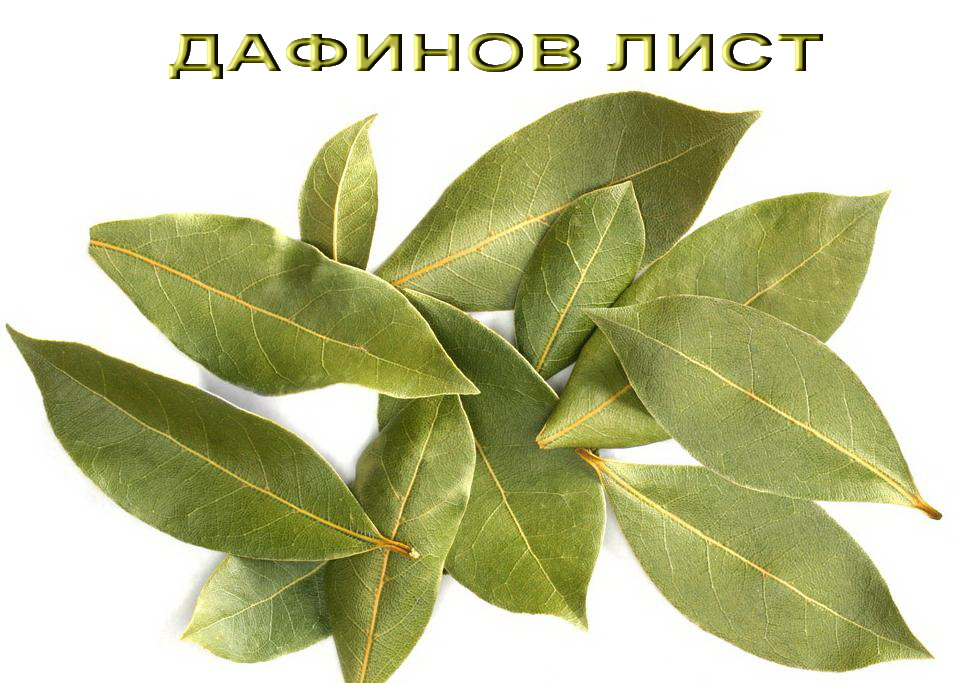 Дафинов лист, BayLeaves