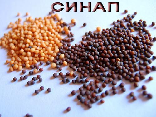 Синап, mustard-seeds