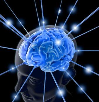 brain-764096
