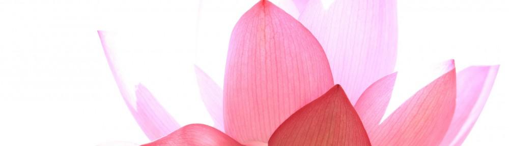 cropped-lotuswallpaper16X10.jpg