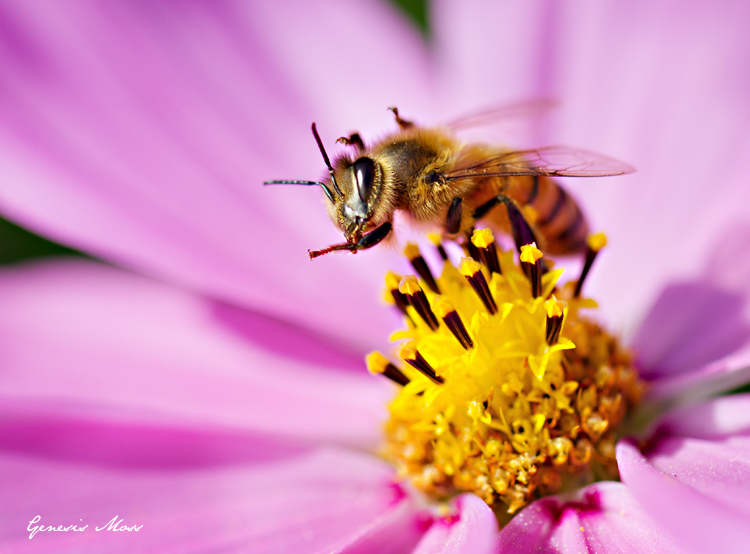 Bee_Macro