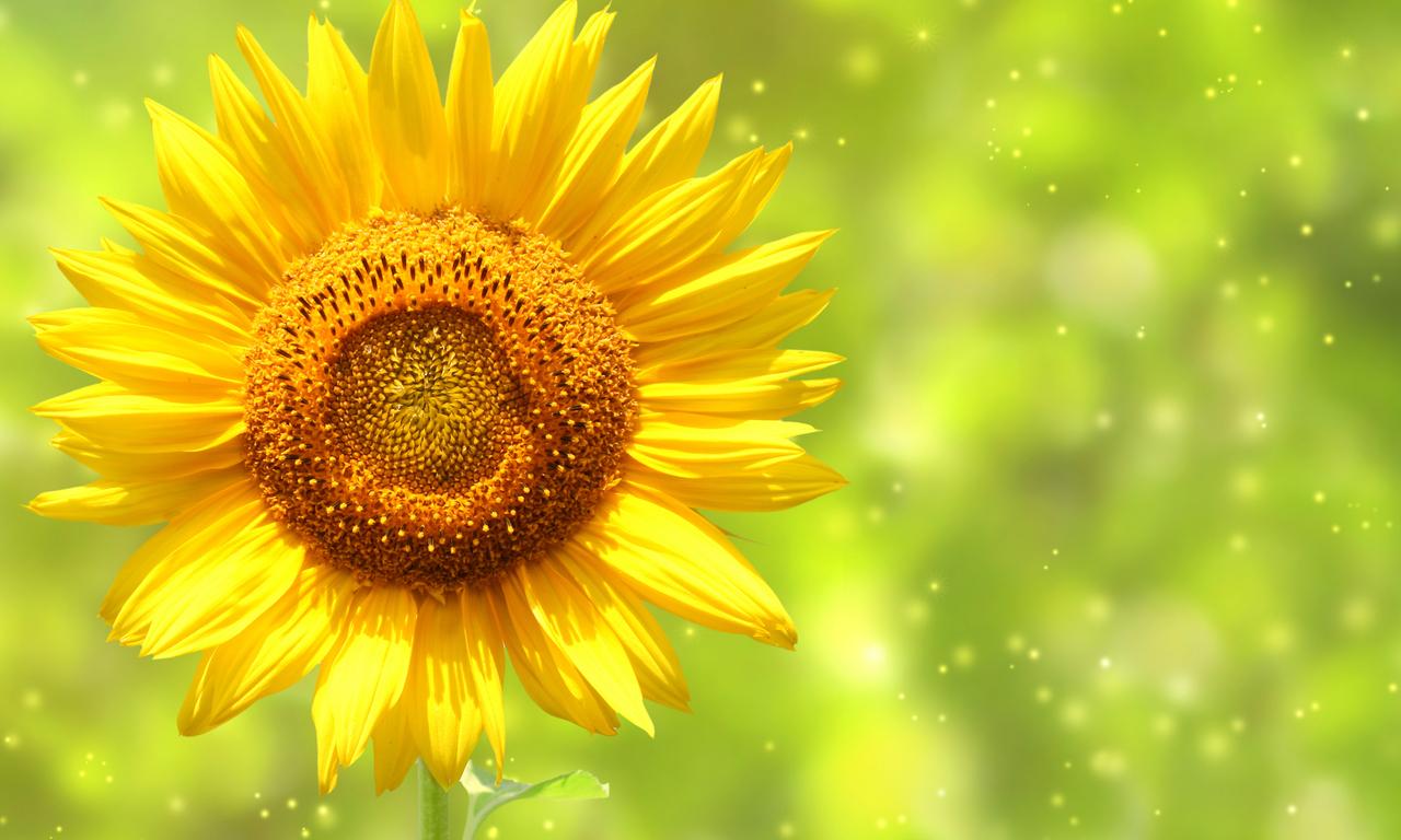 Да светнем като слънчогледи!...