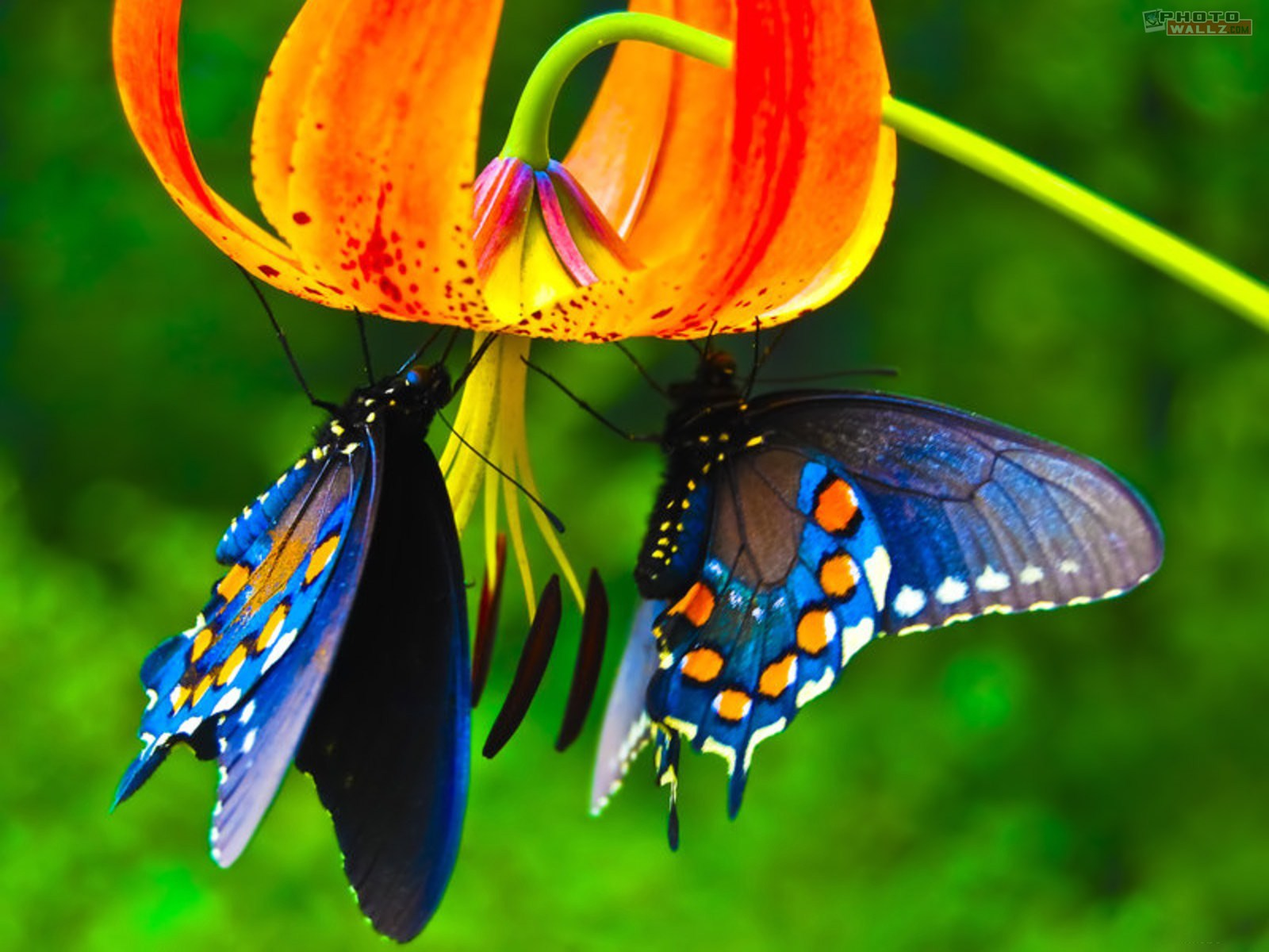 blue-butterfly-wallpapers-2011
