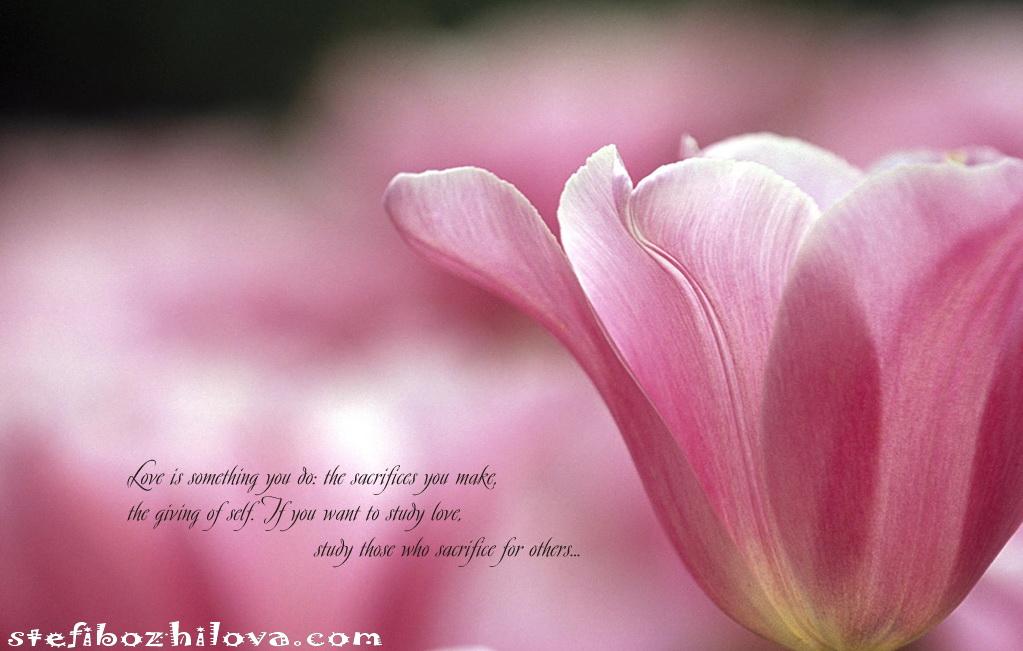 """Любовта е нещо, което правиш: саможертвата, която правиш, отдаването на """"себе""""-то. Ако искаш за изучиш Любовта, изучавай онези, които се жертват за другите..."""