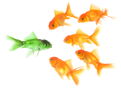 Being different - fish