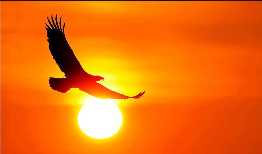 Eagle flying sky sun